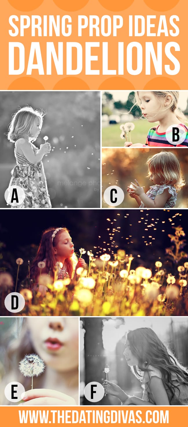 Dandelion Spring Photography