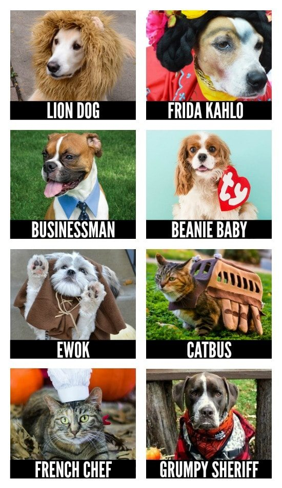 DIY Halloween Costumes for Pets