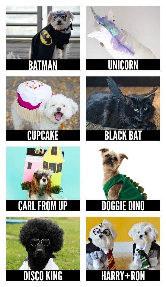 More DIY Halloween Costumes for Pets