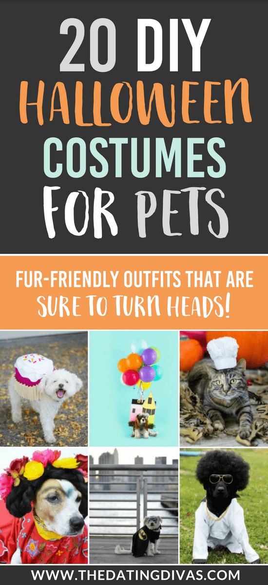 101 DIY Halloween Costumes for Pets #halloweencostumes #diyhallioween
