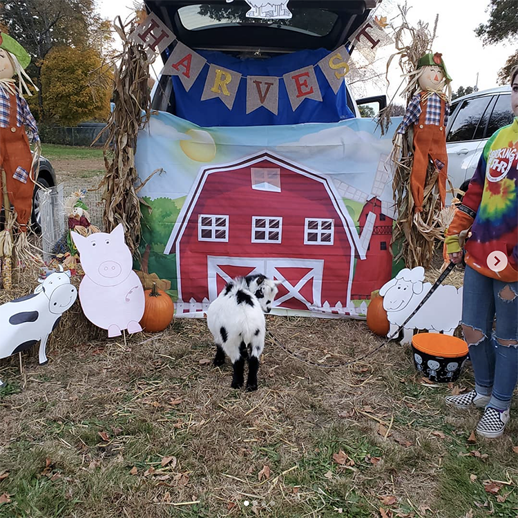 Trunk decorated as a barn with various farm animals - a great trunk or treat idea for Halloween | The Dating Divas