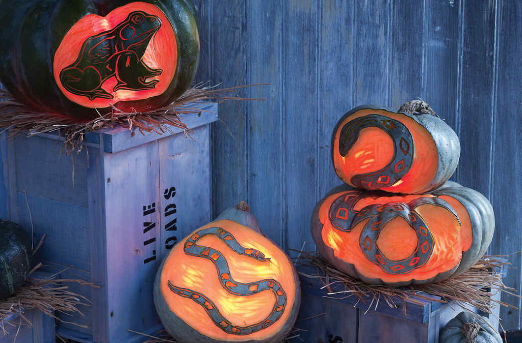 Snake pumpkins and reptile stencils for pumpkin carving patterns. | The Dating Divas
