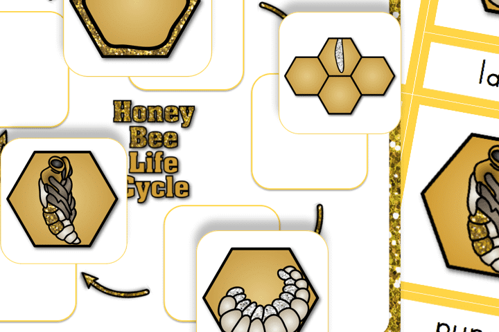 Preschool worksheets all about the life cycle of the honey bee | The Dating Divas