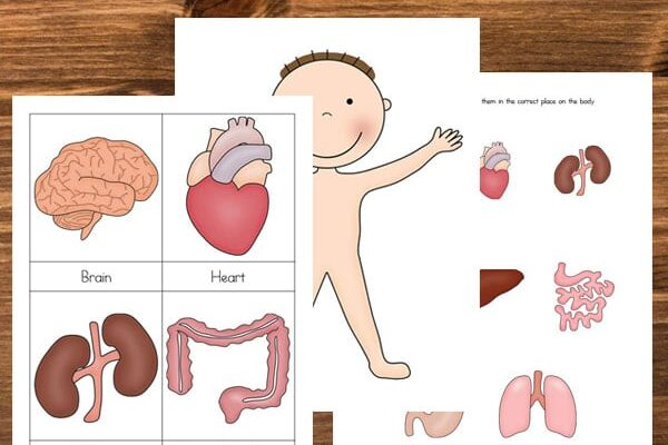 Human body printable preschool worksheets | The Dating Divas
