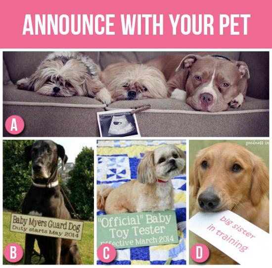 Becca-Pregnancy-Pet