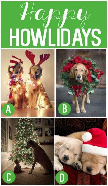 Happy Howlidays Cute Pet Christmas Card Idea