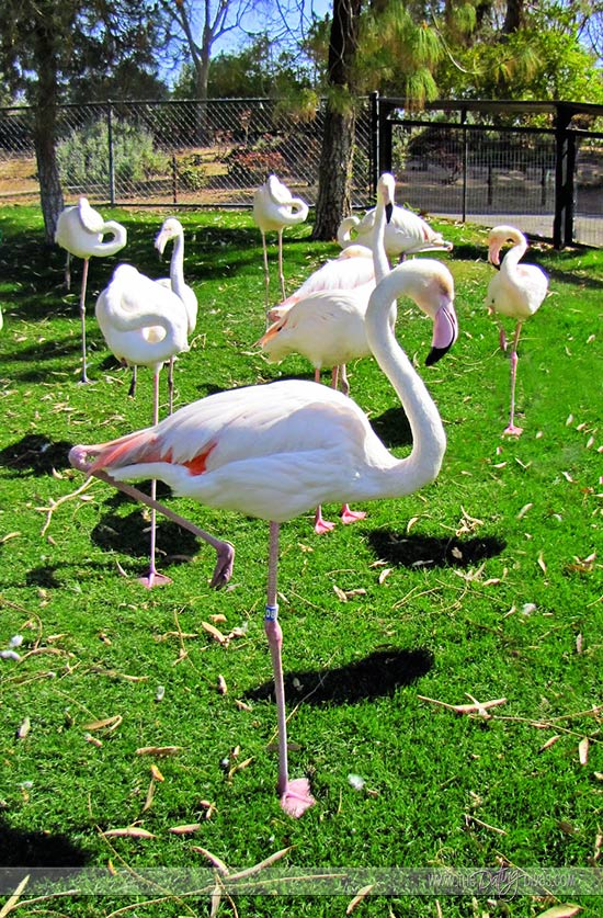 Julie-Zoo-Date-Flamingos_Websize