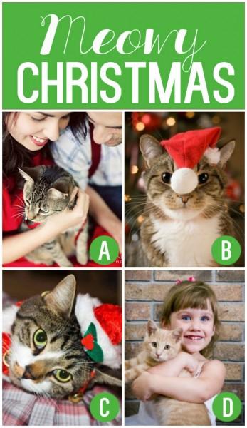Meowy Christmas Card Idea
