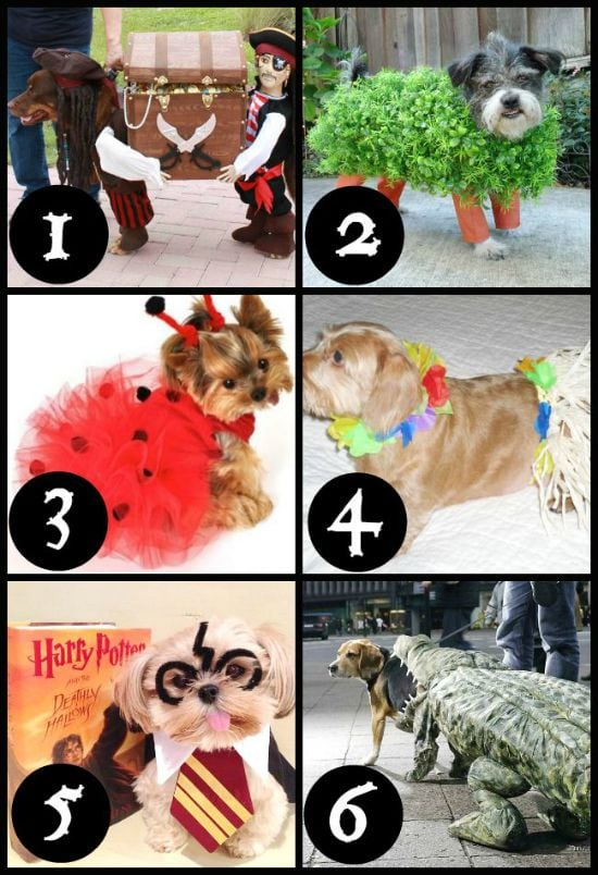 Easy Halloween Costumes for Dogs